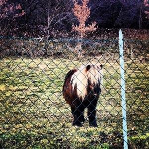Il pony scherzosamente soprannominato Enzo Paolo Turchi